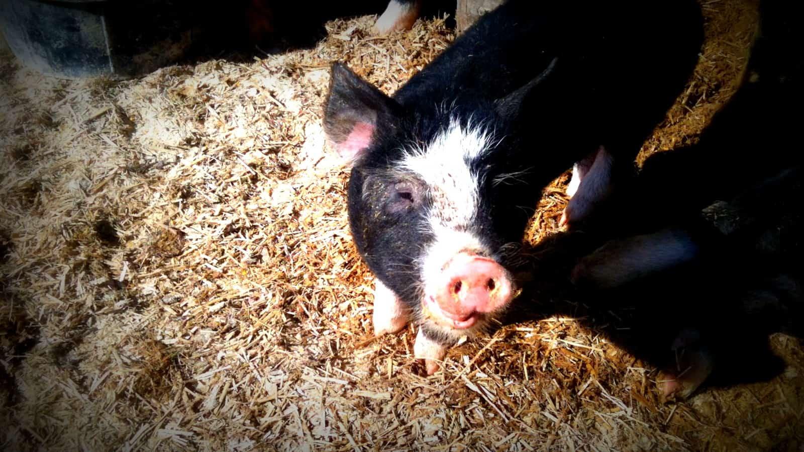 Pig Share Spring 2015