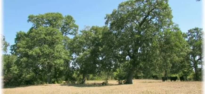 Are You Looking For A Texas Farm For Sale?